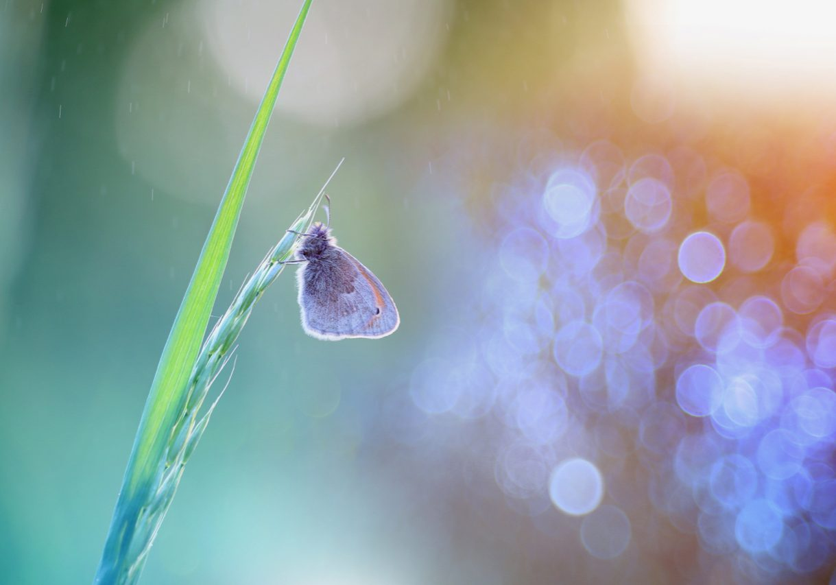 Live Your Purpose_Butterfly_Original_Website