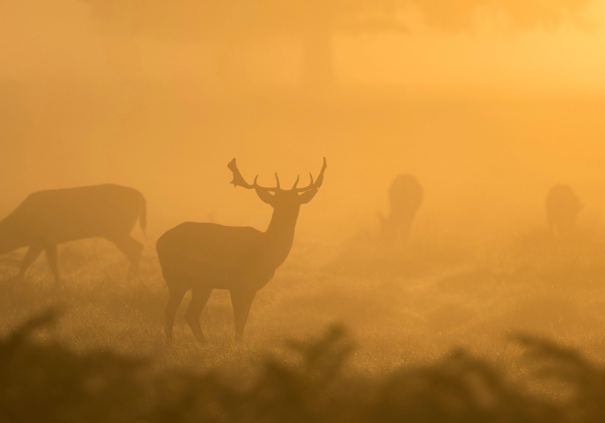 stags-in-the-mist_16x9